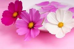 λουλούδια διακοσμήσε& στοκ φωτογραφία