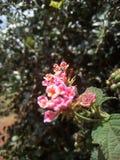 Λουλούδια εγκαταστάσεων στοκ εικόνες