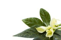 λουλούδια ειδικά Στοκ Εικόνες