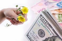 Λουλούδια εκμετάλλευσης χεριών εκτός από τα τραπεζογραμμάτια αμερικανικών δολαρίων Στοκ Εικόνα
