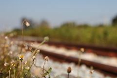 Λουλούδια εκτός από το σιδηρόδρομο Στοκ εικόνα με δικαίωμα ελεύθερης χρήσης