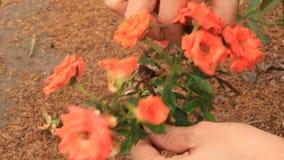 Λουλούδια επιλογής κοριτσιών στον κήπο φιλμ μικρού μήκους