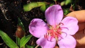 Λουλούδια επιλογής κοριτσιών στον κήπο απόθεμα βίντεο