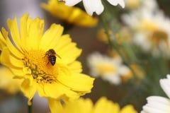 Λουλούδια Ινδία Αμερική ΗΠΑ Ντουμπάι Karnataka κόσμου Στοκ φωτογραφία με δικαίωμα ελεύθερης χρήσης