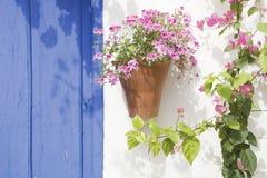 λουλούδια ισπανικά Στοκ Εικόνες