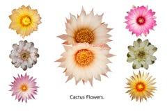 λουλούδια κάκτων που τί&the Στοκ Εικόνες