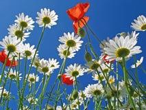 λουλούδια κάτω Στοκ Φωτογραφίες