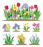 Λουλούδια κήπων άνοιξη Χλόη και εγκαταστάσεις Πρόωρο διάνυσμα ανθίσματος άνοιξη απεικόνιση αποθεμάτων