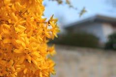 λουλούδια κίτρινα Στοκ Εικόνα