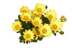 λουλούδια κίτρινα Στοκ Εικόνες