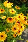 λουλούδια κίτρινα Στοκ φωτογραφίες με δικαίωμα ελεύθερης χρήσης