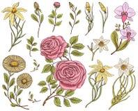 Λουλούδια καθορισμένα, τριαντάφυλλα με τα φύλλα και τους οφθαλμούς, ιατρικοί chamomile χορταριών, daffodil και ορχιδέα, κρίνος Γα διανυσματική απεικόνιση
