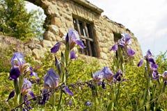 Λουλούδια, και εγκαταλειμμένο σπίτι Στοκ Φωτογραφία