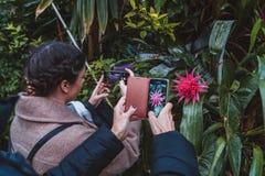 Λουλούδια και εγκαταστάσεις από δέκα διαφορετικές ζώνες κλίματος στοκ φωτογραφία με δικαίωμα ελεύθερης χρήσης