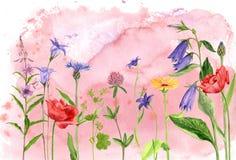 Λουλούδια και εγκαταστάσεις σχεδίων Watercolor Στοκ Εικόνες