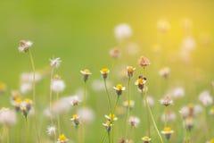 Λουλούδια και καιρός-δίκαιος και bohke υπόβαθρο στοκ φωτογραφία με δικαίωμα ελεύθερης χρήσης