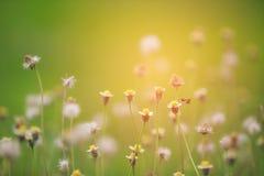 Λουλούδια και καιρός-δίκαιος και bohke υπόβαθρο στοκ φωτογραφίες με δικαίωμα ελεύθερης χρήσης
