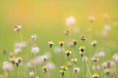 Λουλούδια και καιρός-δίκαιος και bohke υπόβαθρο στοκ φωτογραφίες