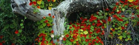 Λουλούδια και κούτσουρο στοκ φωτογραφία με δικαίωμα ελεύθερης χρήσης