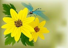 Λουλούδια και λιβελλούλη Στοκ φωτογραφία με δικαίωμα ελεύθερης χρήσης