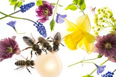 Λουλούδια και μέλισσες άνοιξη Στοκ φωτογραφία με δικαίωμα ελεύθερης χρήσης