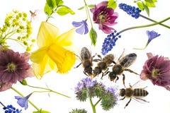 Λουλούδια και μέλισσες άνοιξη Στοκ Εικόνες