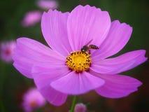 Λουλούδια και μέλισσες Στοκ Φωτογραφία