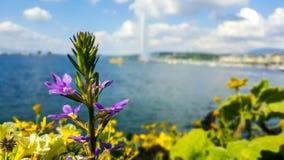 Λουλούδια και μια λίμνη Στοκ φωτογραφίες με δικαίωμα ελεύθερης χρήσης