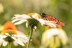 Λουλούδια και μια πεταλούδα μοναρχών στοκ φωτογραφία