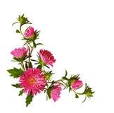 Λουλούδια και οφθαλμοί αστέρων στη ρύθμιση γωνιών στοκ εικόνες