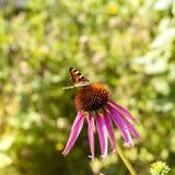 Λουλούδια και πεταλούδα κόσμου στο πράσινο θερινό λιβάδι στοκ εικόνες