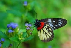 Λουλούδια και πεταλούδες Στοκ εικόνα με δικαίωμα ελεύθερης χρήσης