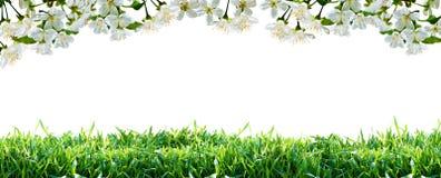 Λουλούδια και πράσινη χλόη άνοιξη συνόρων στοκ εικόνες