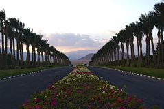 Λουλούδια και φοίνικες στον τρόπο στην έρημο στοκ φωτογραφία με δικαίωμα ελεύθερης χρήσης
