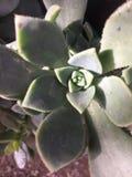 Λουλούδια και φυτά Στοκ Φωτογραφία