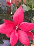 Λουλούδια και φυτά Στοκ Εικόνες