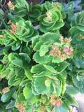 Λουλούδια και φυτά Στοκ Εικόνα