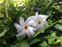 Λουλούδια και φύλλα φύσης στοκ φωτογραφία με δικαίωμα ελεύθερης χρήσης