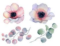 Λουλούδια και φύλλα anemone Watercolor απεικόνιση αποθεμάτων