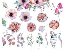 Λουλούδια και φύλλα anemone Watercolor peonies απεικόνιση αποθεμάτων