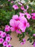 Λουλούδια και φύση στον κήπο στοκ εικόνες με δικαίωμα ελεύθερης χρήσης