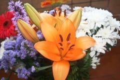 Λουλούδια και χρώματα, πορτοκαλιοί κρίνοι Στοκ Φωτογραφίες