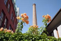 λουλούδια καπνοδόχων Στοκ εικόνα με δικαίωμα ελεύθερης χρήσης