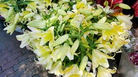 λουλούδια καρτών ανασκόπησης που χαιρετούν τον καθολικό Ιστό προτύπων σελίδων κρίνων Στοκ φωτογραφία με δικαίωμα ελεύθερης χρήσης
