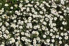 Λουλούδια κατά μήκος της άκρης του δρόμου στο Τέξας στοκ φωτογραφία με δικαίωμα ελεύθερης χρήσης