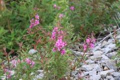 Λουλούδια κατά μήκος της διαδρομής Στοκ Φωτογραφίες