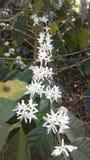 Λουλούδια καφέ στοκ φωτογραφία με δικαίωμα ελεύθερης χρήσης