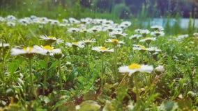 Λουλούδια κινηματογραφήσεων σε πρώτο πλάνο Στοκ εικόνες με δικαίωμα ελεύθερης χρήσης