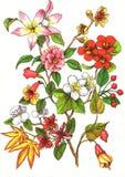 λουλούδια κλάδων ελεύθερη απεικόνιση δικαιώματος