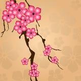λουλούδια κλάδων Στοκ εικόνες με δικαίωμα ελεύθερης χρήσης